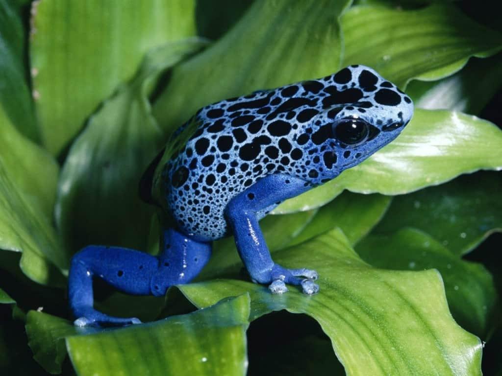 Природа потрудилась на славу: 9 животных с удивительной красоты окрасом