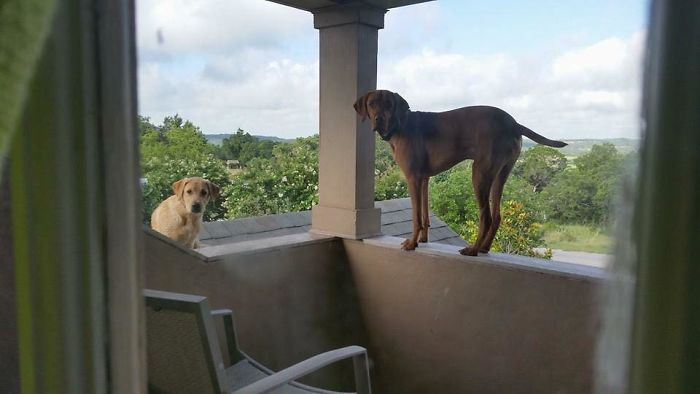 Каждый день этот пес ожидает прибытия своего хозяина интересным способом, а пользователи Сети находят это забавным (фото)