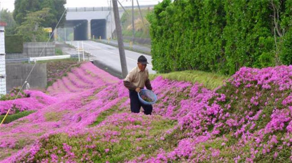 Я подарю тебе море цветов: мужчина 30 лет сажал цветы для своей жены. Результат был просто потрясающим