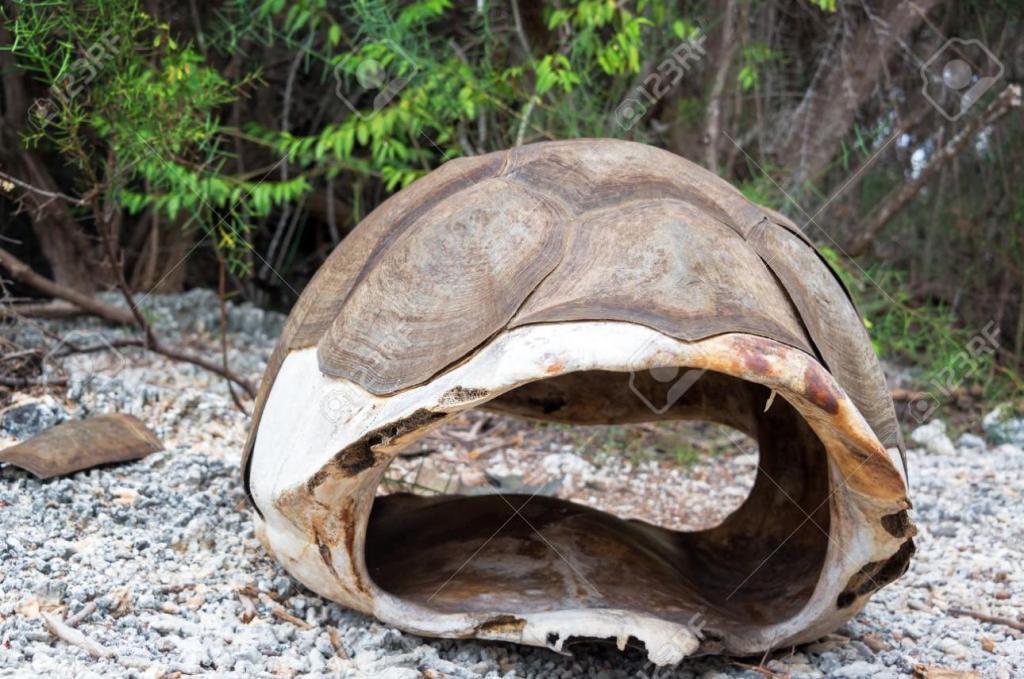 Ветеринар заменил сломанный панцирь черепахи стекловолокном и спас ей жизнь