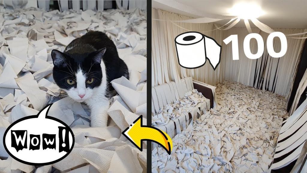 Пара из Белоруссии купила 100 рулонов туалетной бумаги и обклеила ими комнату, чтобы осчастливить своего кота: восторг животного на видео