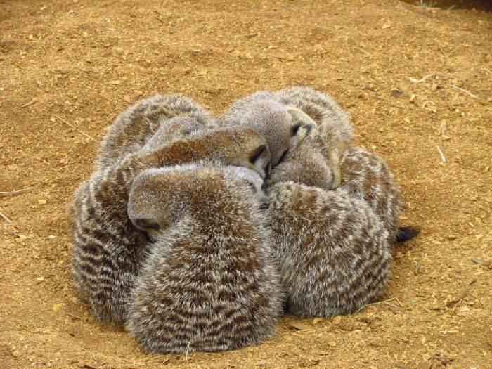 Когда природа отдыхает: удивительные фото спящих животных и птиц