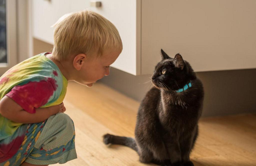 """""""Я продал свой дом и путешествую со своим котом уже 3 года"""" - история необычных путешественников"""