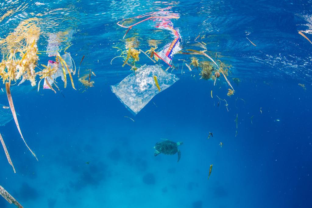 Корейские ученые нашли в соли пластик: как обычный продукт стал опасным