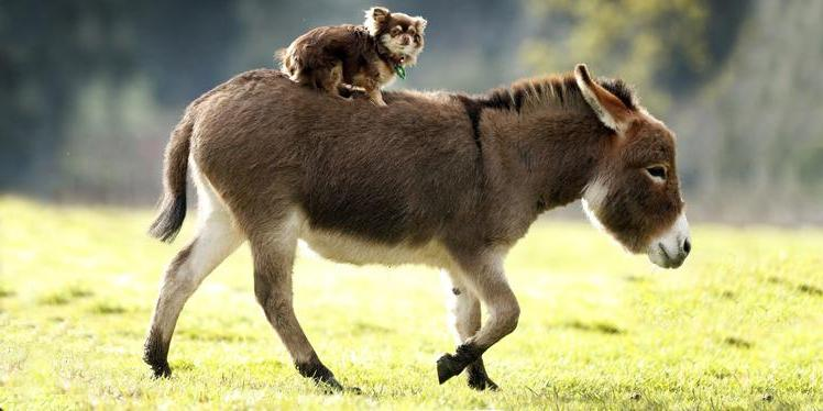 А он мне нравится! Экзотические животные, которые для некоторых являются любимыми домашними питомцами
