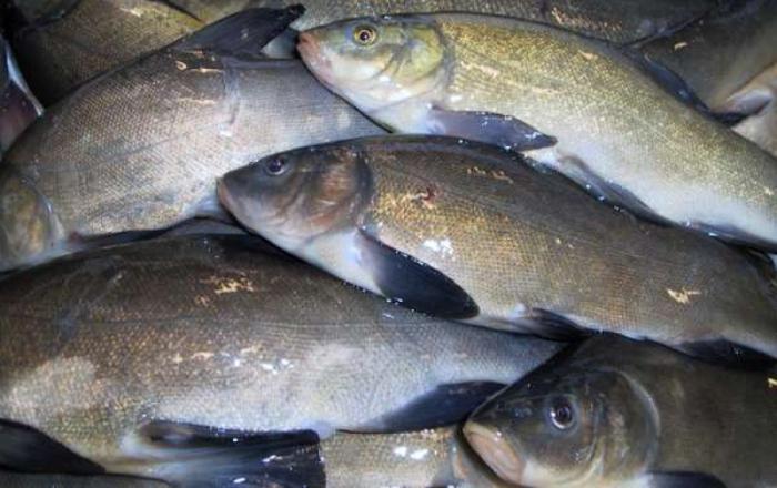 Как быстро почистить рыбу линь
