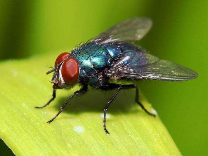 история фразеологизма мухи не обидеть