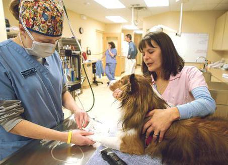 ветеринарные клиники в орле в северном районе