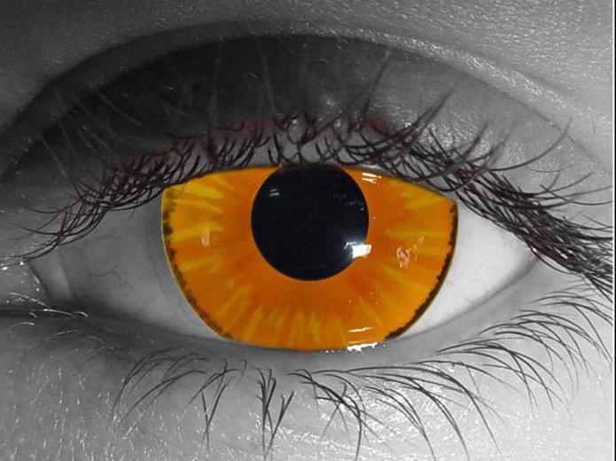 однодневные контактные линзы какие лучше