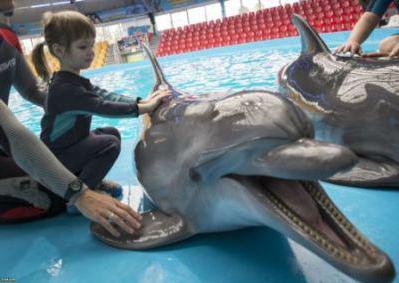 а где можно поплавать с дельфинами
