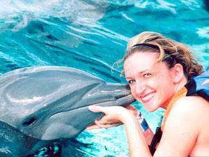 поплавать с дельфинами в москве