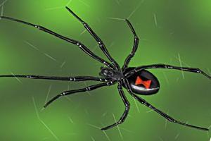 самый ядовитый паук в мире