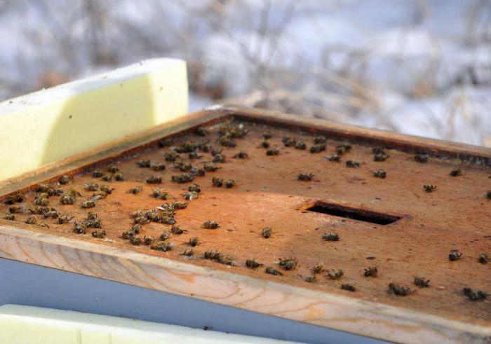 зимовка пчел на улице на урале