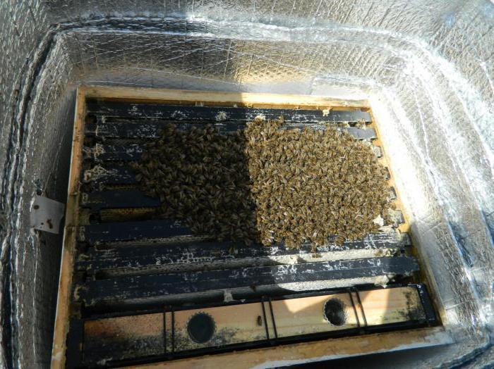 как готовить пчел к зимовке на улице