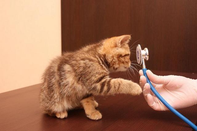 государственная ветеринарная клиника в москве юзао