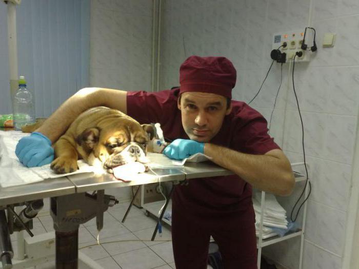 государственные ветеринарные клиники москвы цао