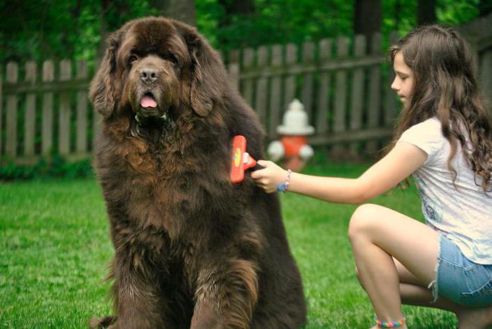 фурминатор для собак отзывы