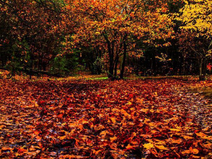 экибана из листьев своими руками осень