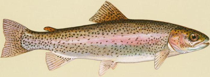 рыбы самарской области фото
