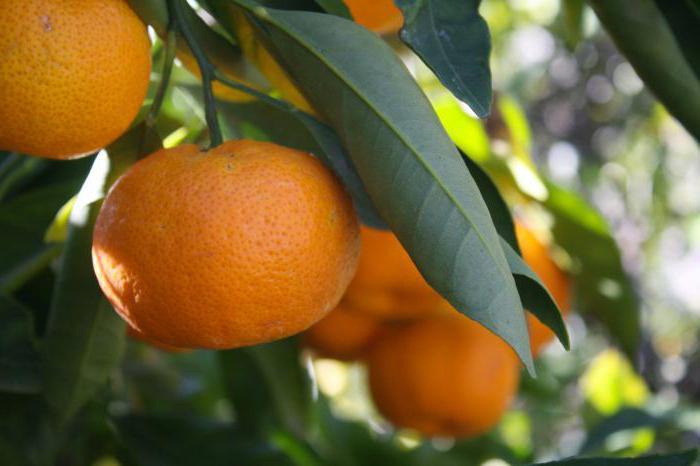 как хранить мандарины в домашних
