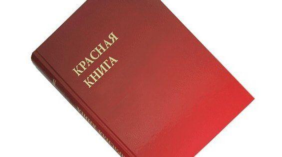 растения занесенные в красную книгу ростовской области