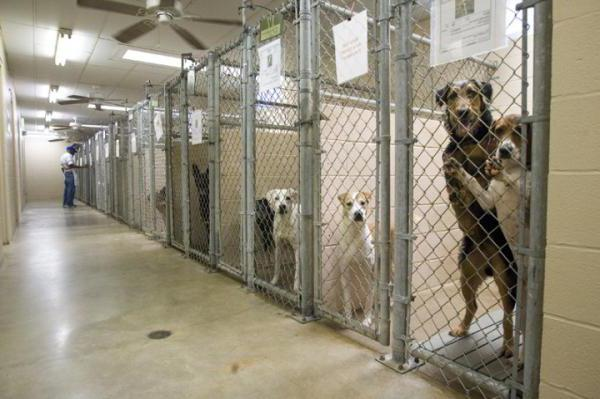 приют для собак в нижнем новгороде