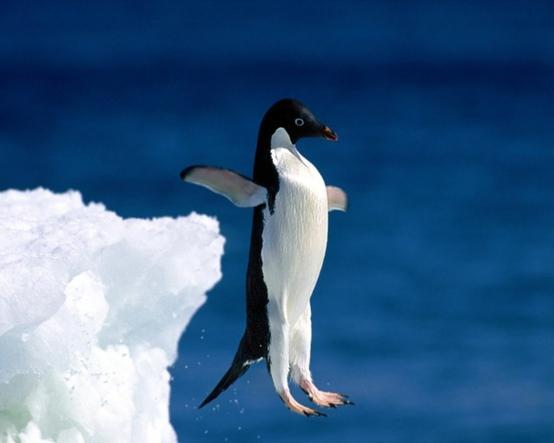 почему пингвин не летает