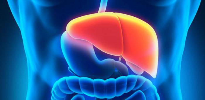 Внутренние органы пищеварительная система