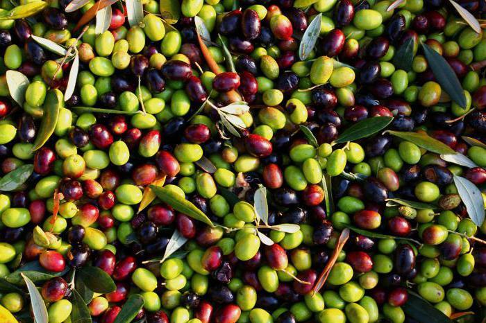 маслины польза и вред для похудения
