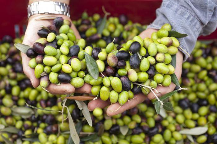 маслины польза и вред для организма