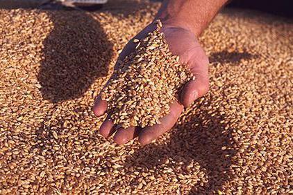 Как сделать мельницу для зерна