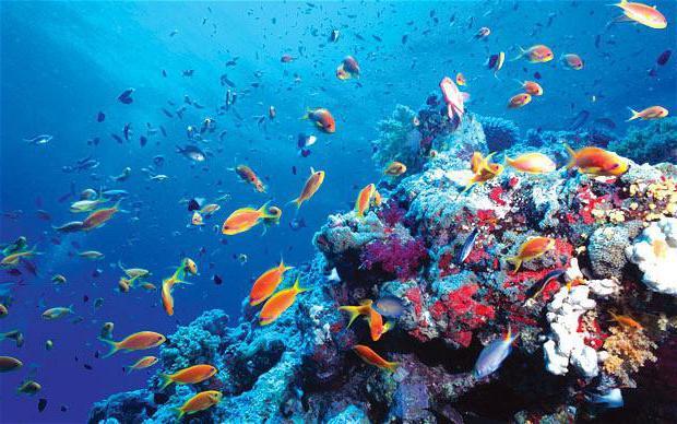 к чему снится океан с волнами