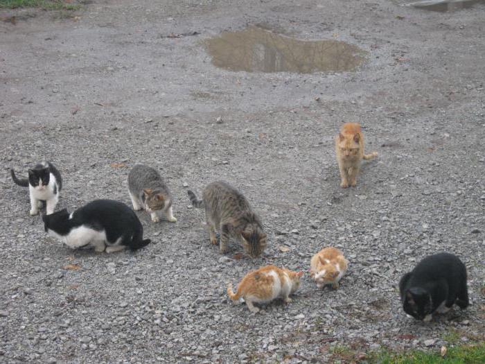 кошки поведение кошек