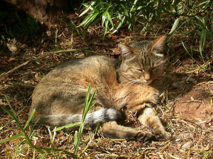 стерилизация кошек поведение