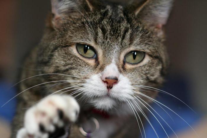 особенности поведения кошек