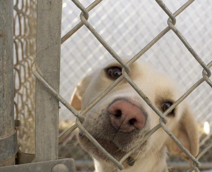 отдать собаку в приют в московской области