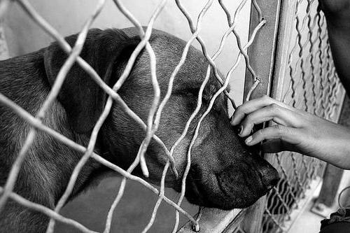 приют для собак отдать щенка