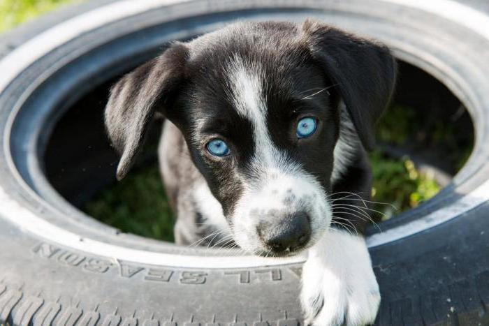 куда отдать собаку в приют