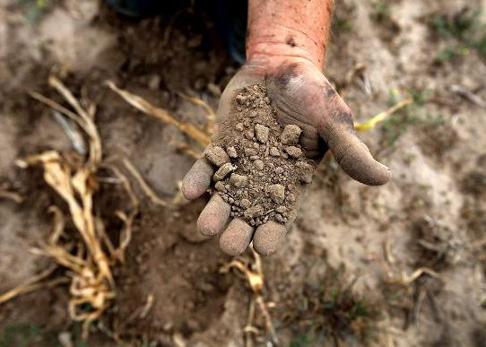 Органические удобрения виды и их характеристика