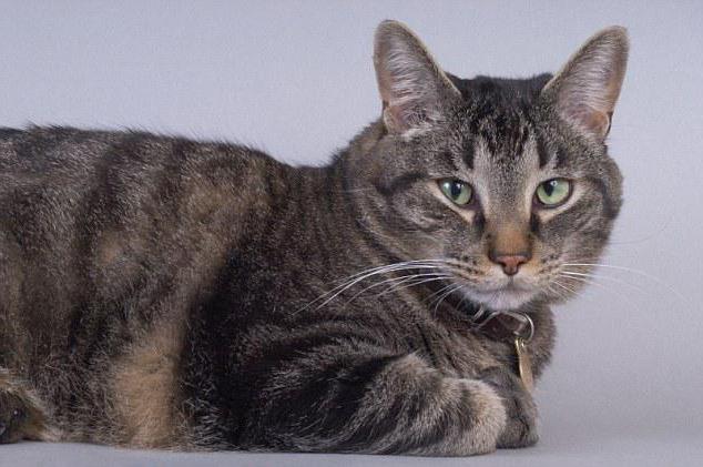 корм для кошек при панкреатите
