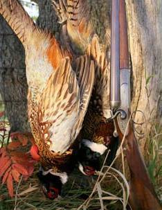 охота на фазана в украине для дачи Хабаровске