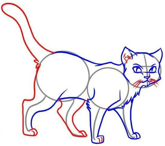 обрисовка контура кота
