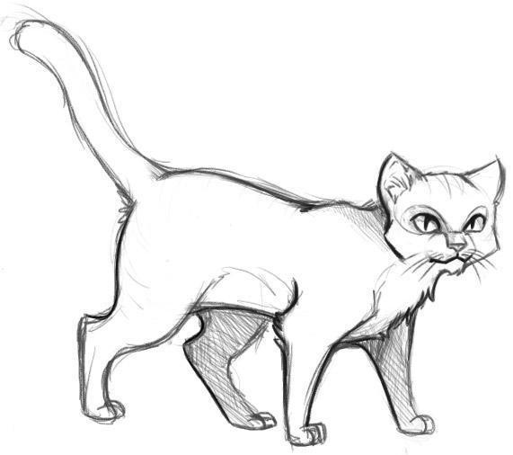 готовый рисунок кота
