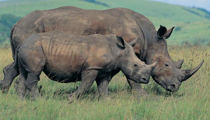 где найти индийского носорога