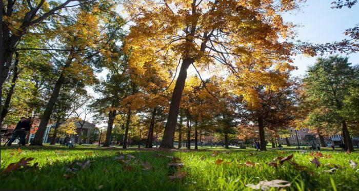 дендрологический парк южные культуры