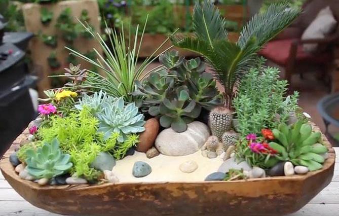 композиция из кактусов и суккулентов
