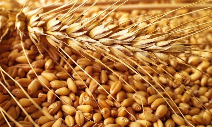 чем отличается фуражное зерно от обычного зерна
