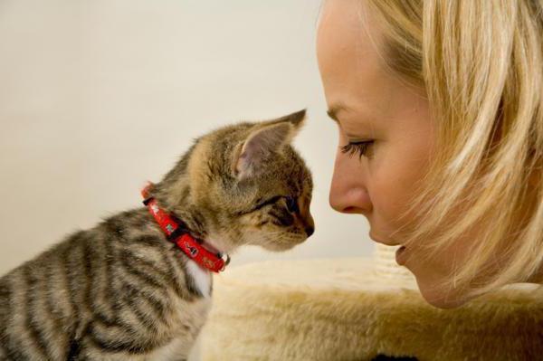 почему месячный котенок постоянно мяукает причины