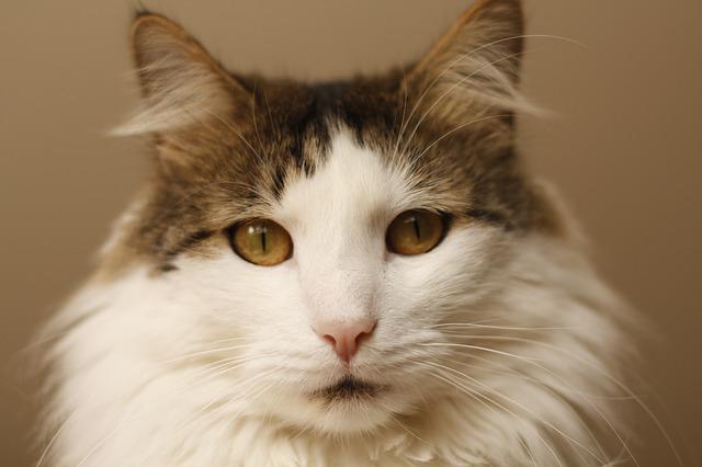 аллергический дерматит у кошек