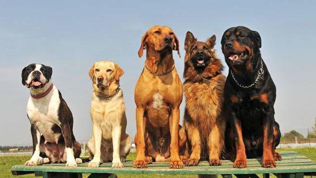 питомники собак нижний новгород адреса